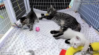 Download Fantastical Kittens - No Bath, Mama Video