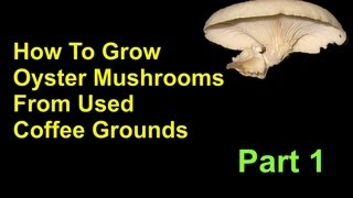 Download How To Grow Oyster Mushrooms From Used Coffee Grounds Cheap And Easy - Part 1 Video