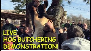 Download Annual Hog Butchering Demonstration at the Old South Farm Museum Video