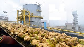 Download Beautiful Modern Technology Factory Sugar Beet Processing Plant Automatic Video