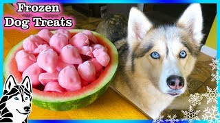 Download STRAWBERRY WATERMELON DOG TREAT | How to make Frozen DIY Dog Treats | Snacks with the Snow Dogs 82 Video