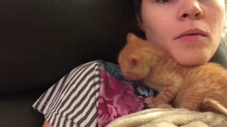 Download Cuddling With Five Week Old Kittens on the Couch! Video