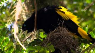 Download NAT GEO WILD HD (LIVING MUSIC ACTION) 2012 Video