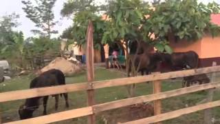 Download Siguate catacamas en el campo Video