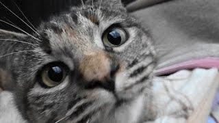 Download 野良猫親子 真冬の猫ハウスに湯たんぽ配達 Video