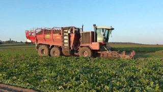 Download Sugarbeet harvest with 2 phases Gilles equipment Video
