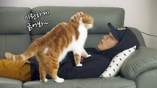 Download 고양이들 앞에 누워있으면 생기는 상황들 Video