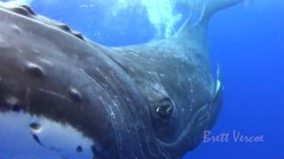 Download Closest whale encounters Video