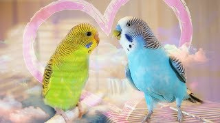 Download Budgie gets girlfriend for the first time | Vlog #3 Cookie Video
