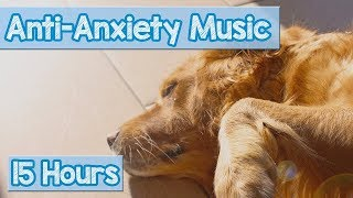 Download Calming Music for Puppies with Anxiety! Soothing Lullabies for Anxious and Stressed Dogs! (Tested) Video