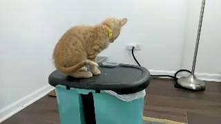 Download Kitten Close Up 2018-07-15 Video