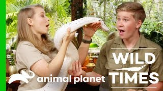 Download Mischievous Meerkats And An Amazing White Python! | Wild Times Video