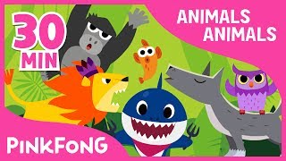 Download Animals, Animals | Baby Shark and More | +Compilation | Animal Songs | Pinkfong Songs for Children Video