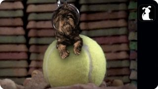 Download Miley Cyrus - Wrecking Ball Parody - ″Tennis Ball″ Video