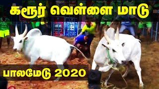 Download Karur Vellai Maadu | Palamedu Jallikattu 2020 | கரூர் வெள்ளை மாடு பாலமேடு அதிரும் SP Kumar Maadu Video