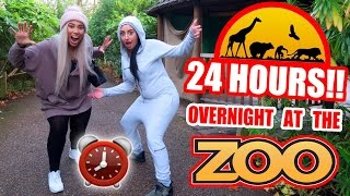 Download OVERNIGHT IN A ZOO ⏰ 🚨 24 HOUR FORT CHALLENGE (GONE WRONG) Video