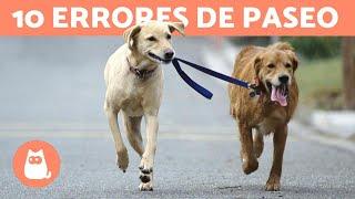 Download 10 errores comunes al pasear con tu perro Video