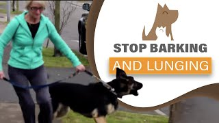 Download How to STOP your dog barking/ lunging at visitors & dogs; aggression Video