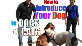 Download How to Introduce a NEW DOG to Your Other Pets Video