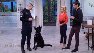 Download Meet Jett the Police Dog! - Pickler & Ben Video