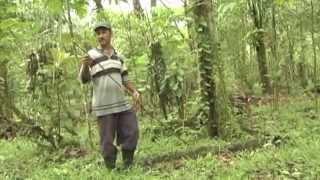 Download Como sembrar y cultivar vainilla Video