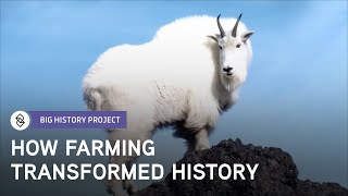 Download Why Was Agriculture So Important? | Big History Project Video