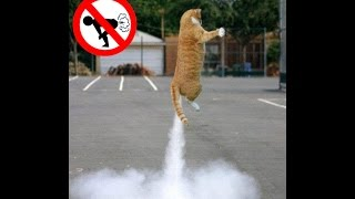 Download Funny dogs and cats scared of farts compilation (Try not to laugh) Video