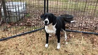Download Good Golly Miss Molly Rescued feral dog on her own for 3 years Video