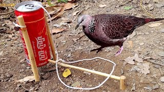 Download Amazing Quick Bird Trap From Cans Coca-Cola Video