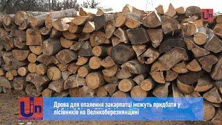 Download Дрова для опалення закарпатці можуть придбати у лісівників на Великоберезнянщині Video