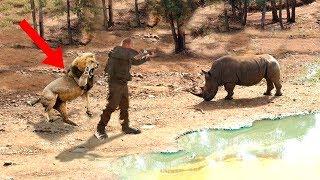 Download Unbelievable Animals SAVING Other Animals! Video