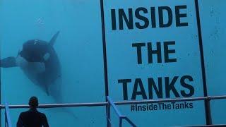 Download Inside The Tanks (Full Documentary) Video