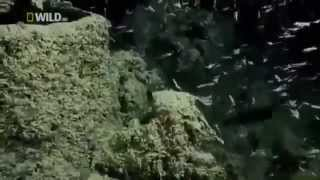 Download Full Documentary Creatures of the Deep Ocean Wildlife National Geographic Video