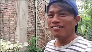 Download PENOMENA ALAM..Daun Kelor Ajaib Warna Putih Video