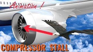 Download What makes BIRD STRIKES so dangerous ? Video
