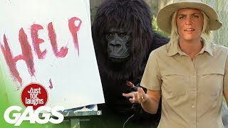 Download Funniest Gorilla and Mouse Pranks - Best Of Just For Laughs Gags Video