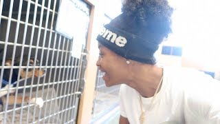 Download HE WANNA COME HOME WITH US!! (PET SHOPPING) Video