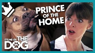 Download Rowdy Mastiff is the 'Prince' of Darkness! | It's Me or the Dog Video