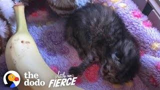Download Watch A 3-Day-Old Kitten Grow Up So Big And CUTE | The Dodo Little But Fierce Video