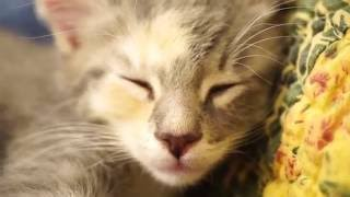 Download Sleepy Kittens Video