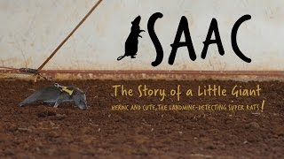 Download Isaac. The Story of a Little Giant. Heroic and cute, the landmine-detecting super rats! Video