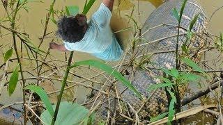 Download GIANT SNAKE EATS MAN? Huge Snakes and Humans Video