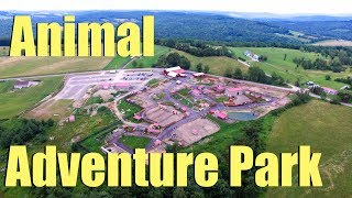 Download Animal Adventure Park - Harpursville, NY - Tajiri The Giraffe, April te Giraffe & Oliver the Giraffe Video