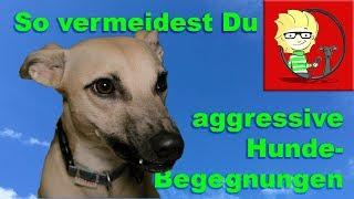 Download (FOLGE 27) Aggressive Hundebegegnungen vermeiden - so geht`s! Video