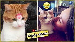Download تجميعية مضحكة جدا للقطط - 😂😼 ستموت من الضحك ( جديد 2019 ) #14 Video