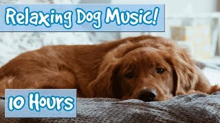 Download Relaxing Music for Dogs with Nature Sounds! Soothing Music to Calm Dogs and Get Rid of Anxiety! 🐶💤 Video