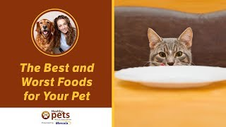 Download The Best and Worst Foods for Your Pet Video