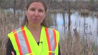 Download Heart Lake Road Ecology Project Video