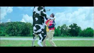 Download Crazy Cow Fight Video