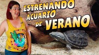 Download ACUARIO PARA TORTUGAS EN VERANO ☀️sternotherus odoratus Video